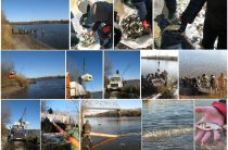 До річки Десна вселено майже 285 тисяч молоді риб