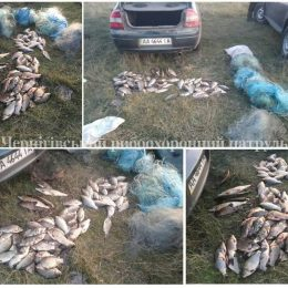 Браконьєри «ловили» рибу за допомогою електроструму